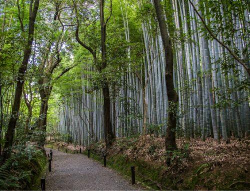 Perché ora tutti investono nel bambù