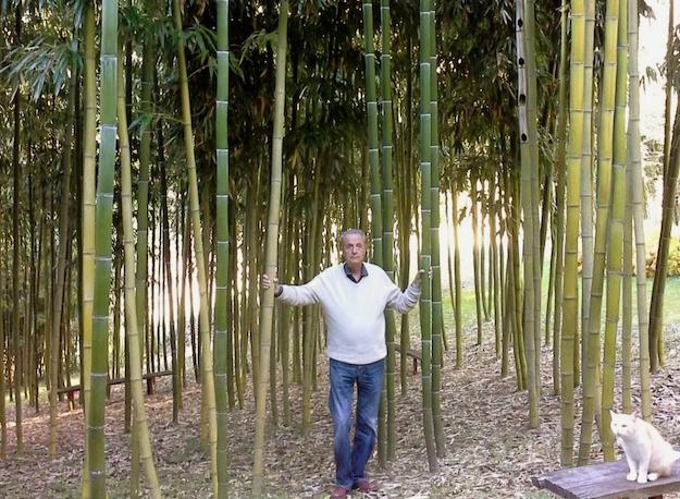 Coltivazione di bambù gigante in Italia, costo e profitto